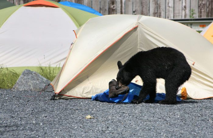 8 Things You Must Know Before Camping in Bear Country | Eureka!